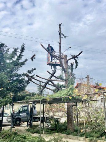 Рязане на дървета , Косене на трева, почистване на терени Варна гр. Варна - image 11