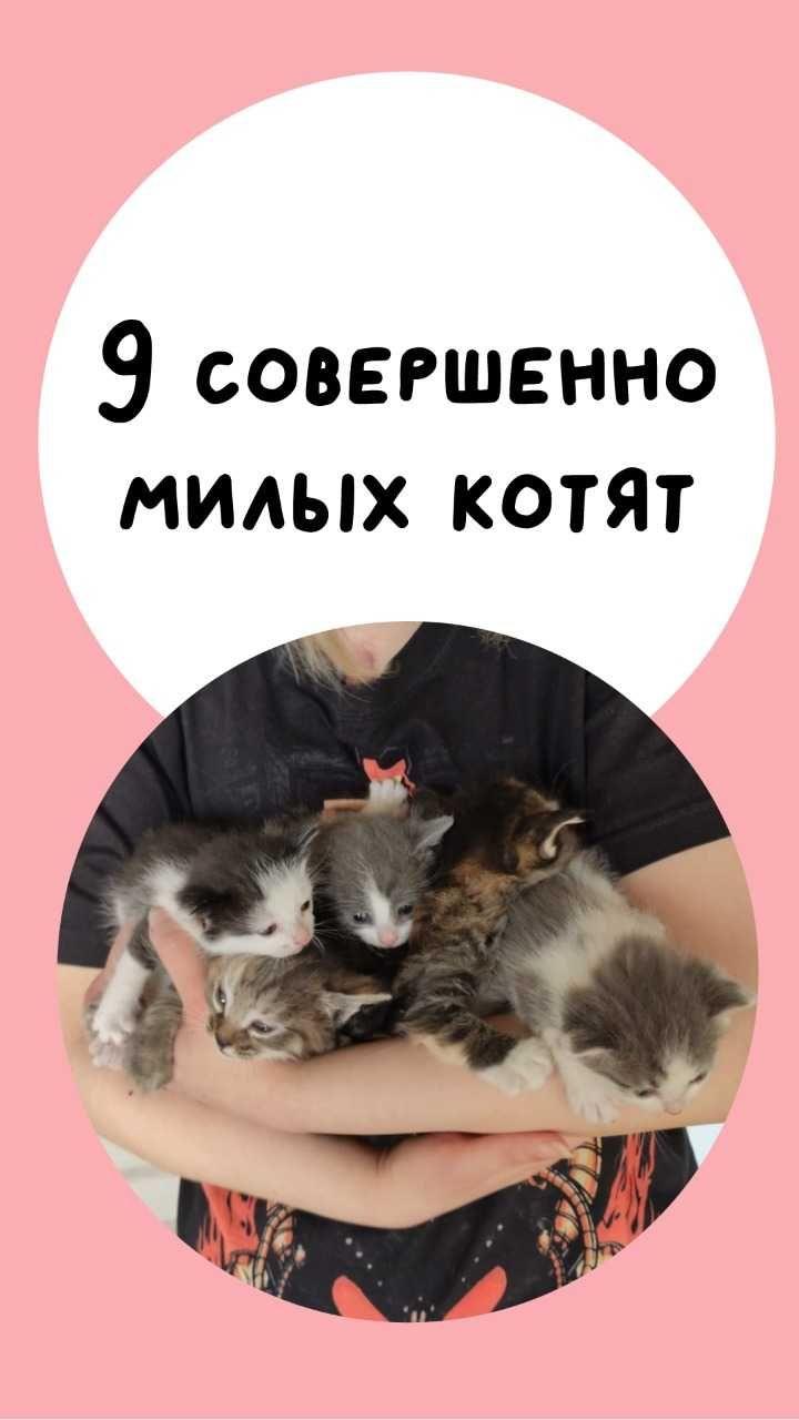 Раздаются самые лучшие котята