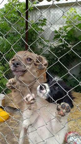 отдадим добрым людям собачек из временного приюта посмотрите им  глаза