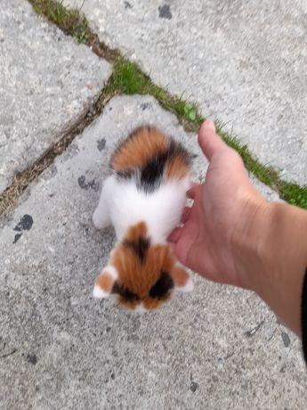 Pisici mici drăguți!!