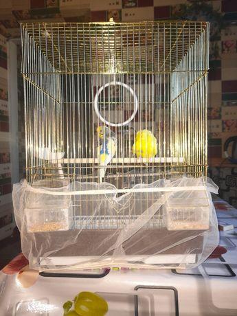 Продам двух попугаев мальчика и девочка