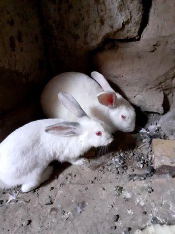 Кролики мама и детёныш