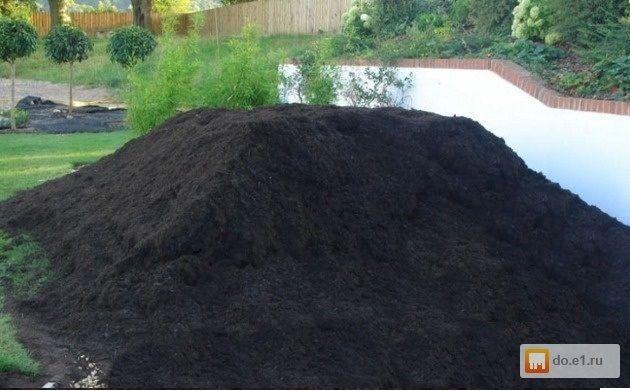 Pamanat negru vegetal Iasi