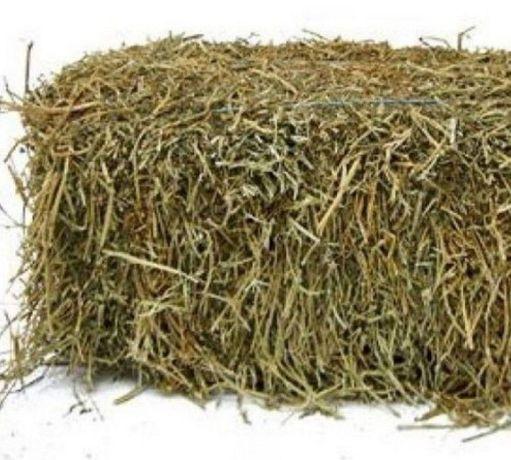 Продам сено в тюках экспорцет