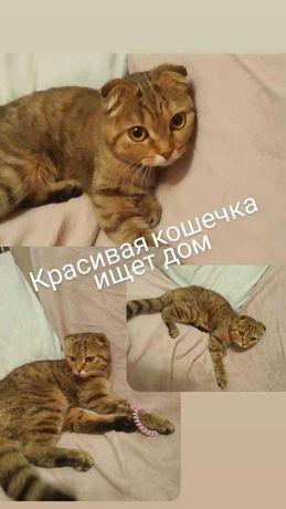Красавица кошка в добрые руки - НЕ ДЛЯ РАЗВЕДЕНИЯ!