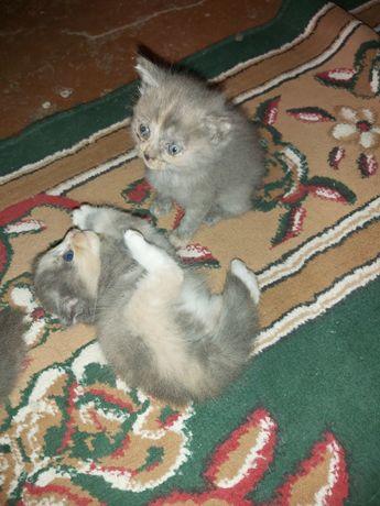 Кошка и Котята бесплатно