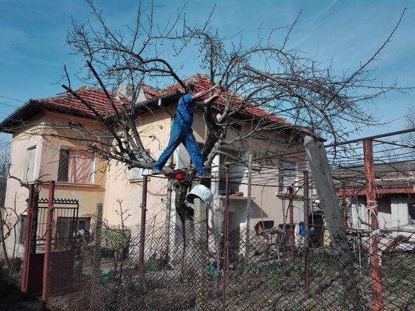 Разчистване на дворове, рязане на опасни дървета ( и дървета на кубик)
