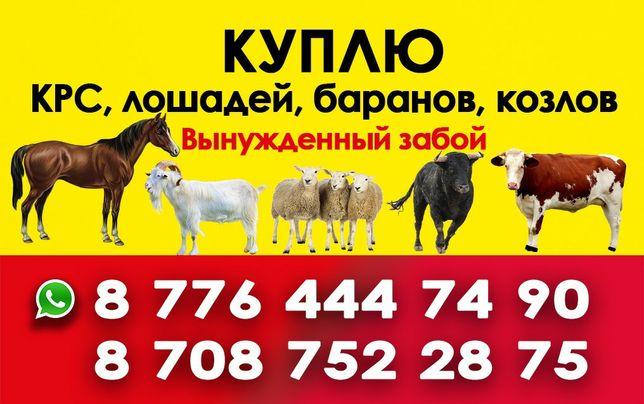 Телок быков коров лошадей баранов