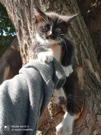 Отдам котят, красивые здоровые котята , проглистованы