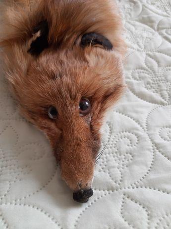 Яка от лисица, естествена