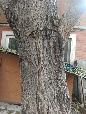 Продам дерево орех