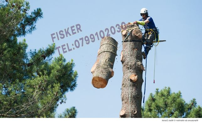 Oferta taiere copaci inalti toaletare pomi cu risc alpinisti utilitari