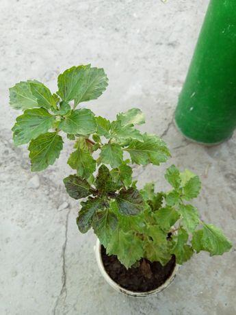 Комнатные растения (Осенняя распродажа)