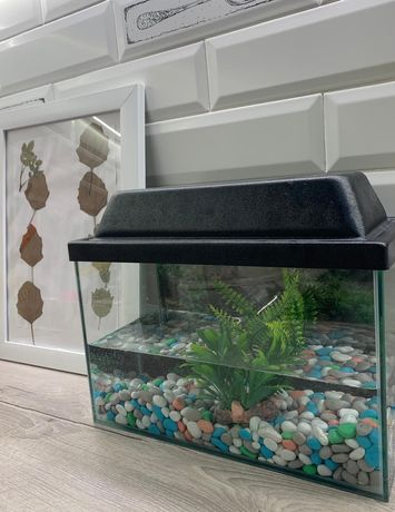 Аквариум для рыбки