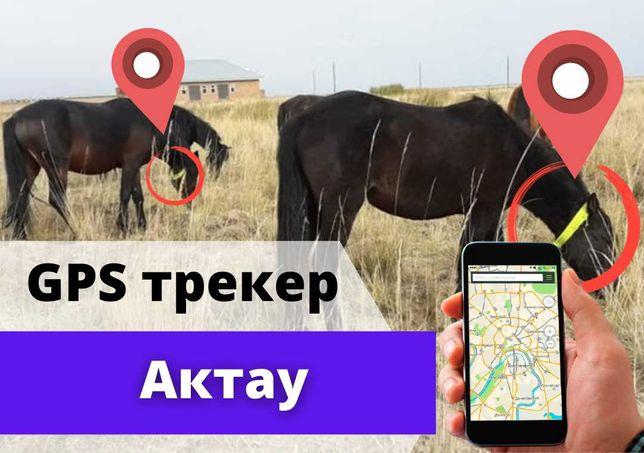 Жылқыға, сиырға және малға арналған GPS трекер Актау