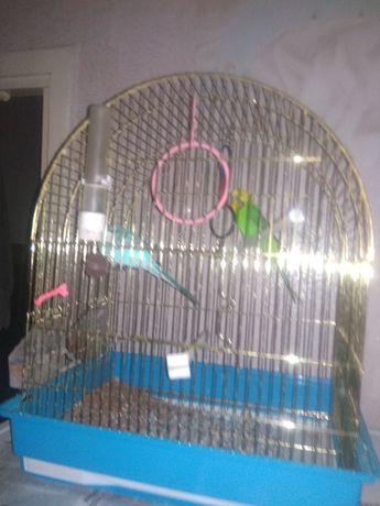 Продам попугайчиков пара