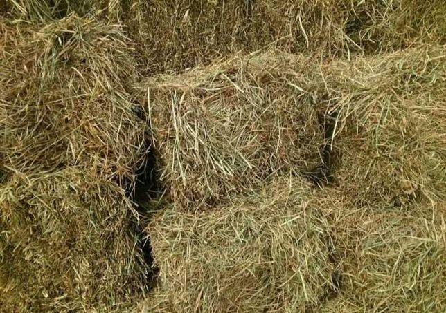 Продам сено в тюках рулонах