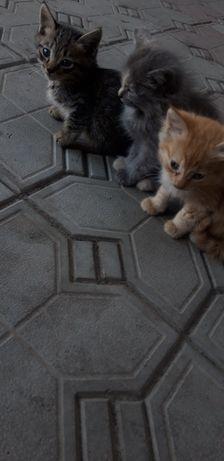 Котята 3 цвета Мальчик и 2 девочки