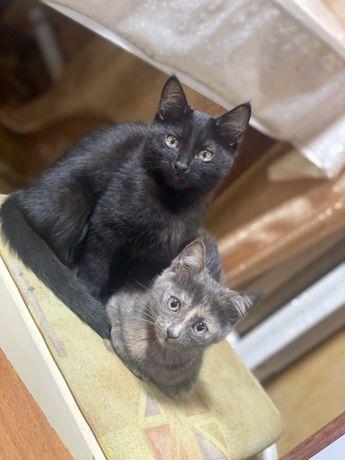 Милые кошечки…Отдам даром!!!
