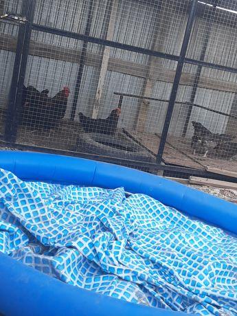 Срочно продам бассейн