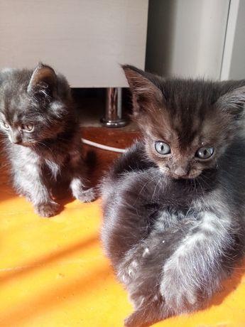 Котята в заботливые и ответственные руки