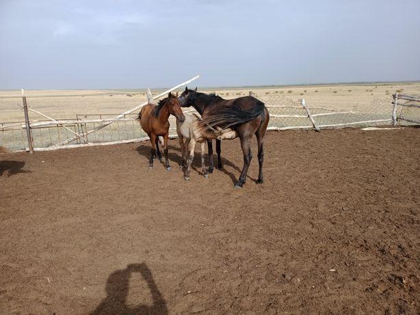 Продам лошадей желательно оптом.