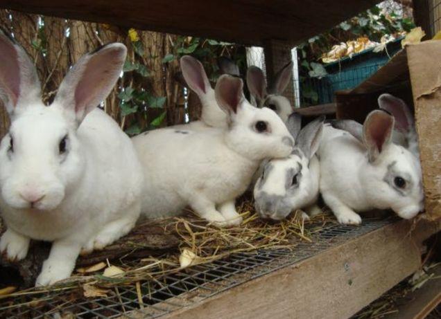 Vand microferma iepuri