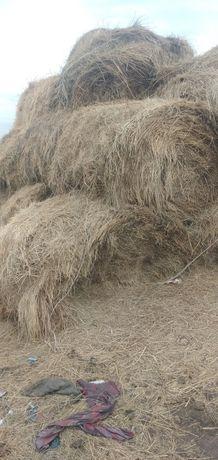 Продам сено в тюках (тюк 300) кг