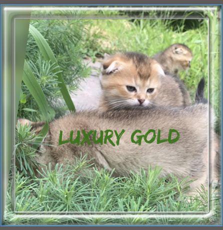 Котята Драгоценного окраса