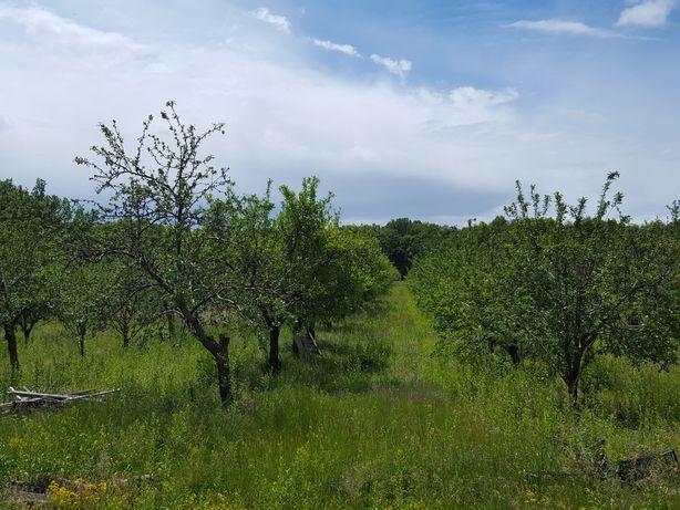 Teren de vanzare cu livada de pruni