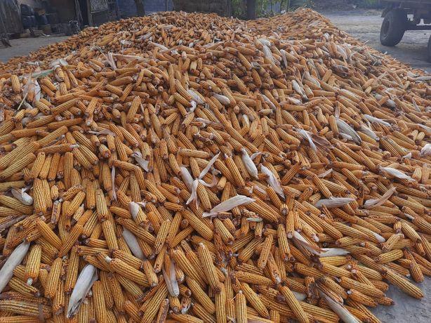 Кукуруза продаётся