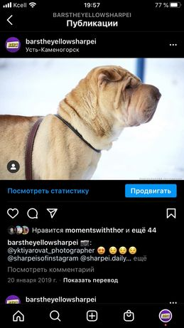 Вязка Шарпей
