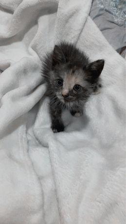 Маленький котенок ищет дом