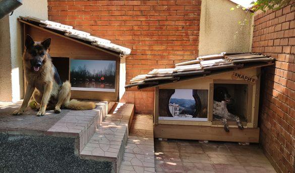 Хотел за кучета игри на воля гр. София