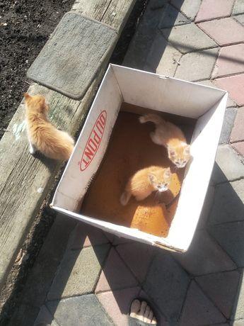 Кошки и котята даром (бесплатно)