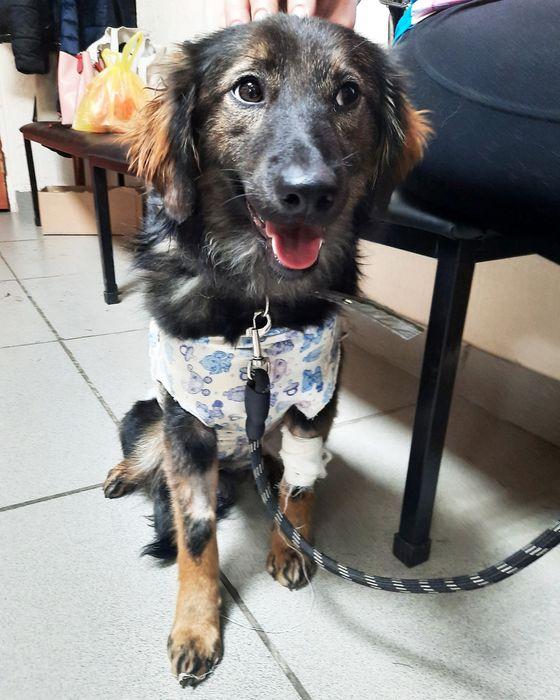 Собачка подросток ищет дом! Усть-Каменогорск - изображение 1