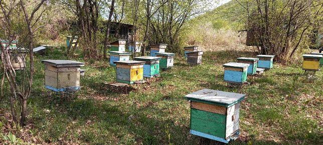 Продам пчелопакеты Дадановские (1 кормовая, 3 расплода) цена 15 000 тг