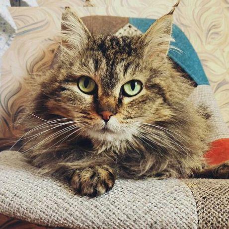 Отдам в хорошие руки Длинношерстный котик возраст около года ищет дом.