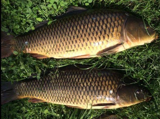 Продается рыба свежая и капченная