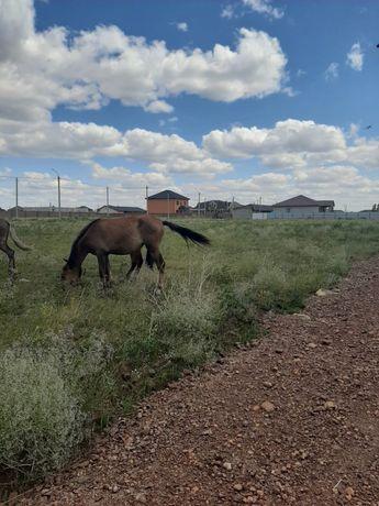 Продам 2 лошади