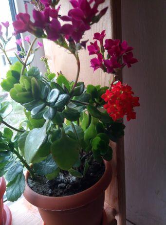 Продам комнатные цветы ,разных видов