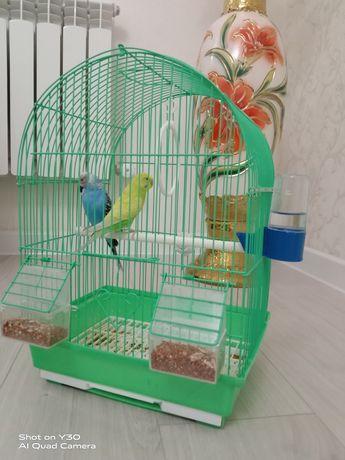 Продам попугаи..