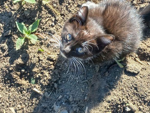 Отдам котят от кошки-крысоловки